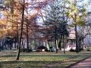park-miejski_5